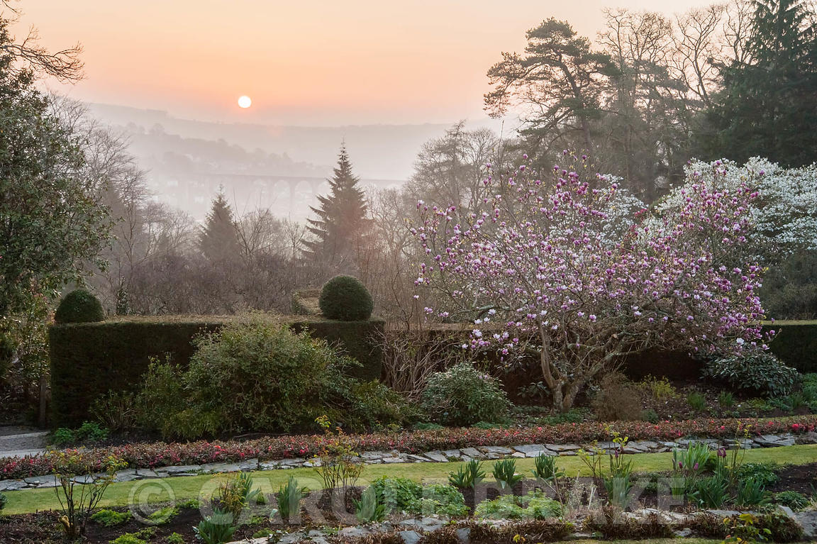 Carole drake dawn seen from the east terrace cotehele for 1161 dawn view terrace