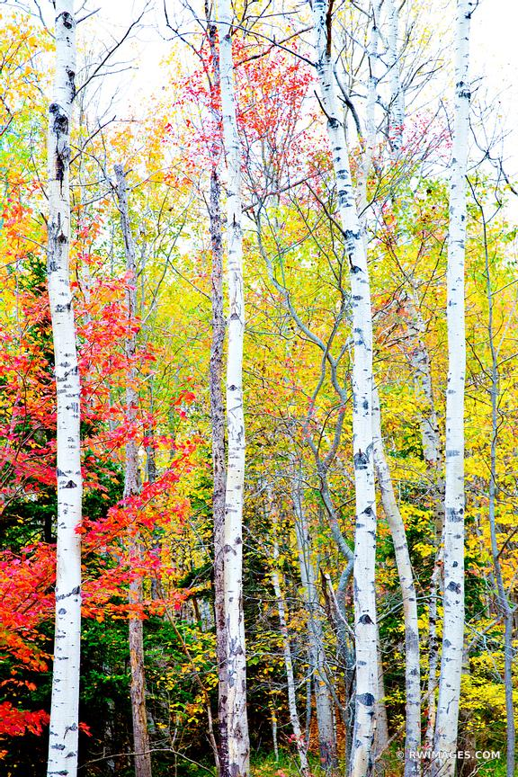 FALL FOLIAGE ACADIA NATIONAL PARK MAINE COLOR VERTICAL