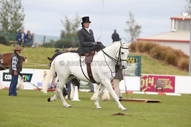 Canty_A_P_131114_Side_Saddle_1206