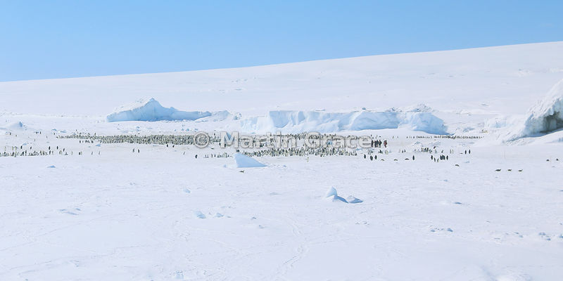 Emperor Penguin (Aptenodytes forsteri) colony from the air, with a few human figures, by Snow Hill Island, Weddell Sea, Antarctica