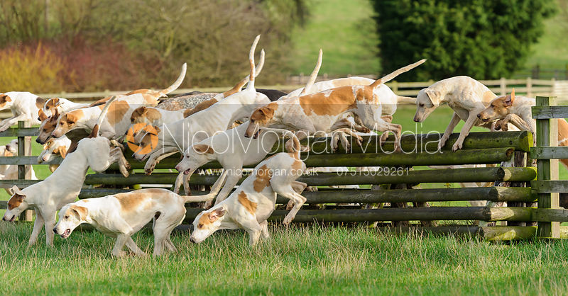 The Quorn Hunt at Markham House 18/12 photos