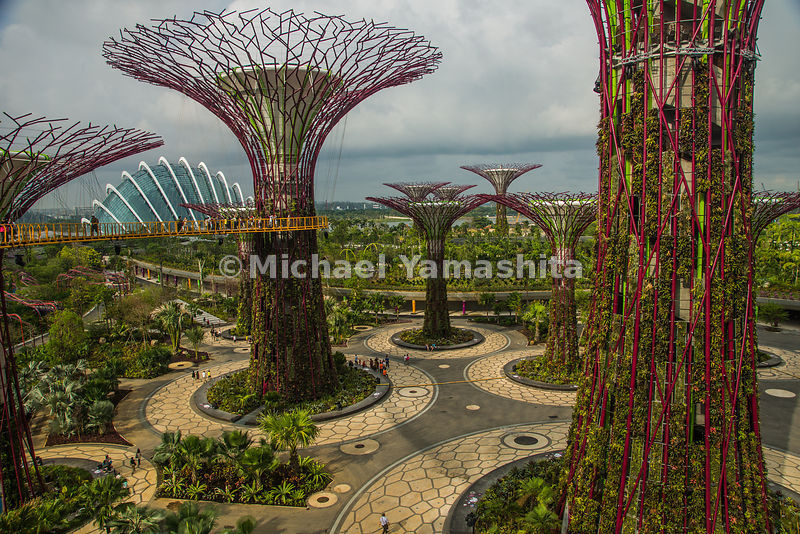 Gardens by the Bay. Supertrees, vertical plant displays. Park just opened 4 days ago. Singapore's bid to become the greenest city on the planet, this Bay south Garden is one of 3 to be built on reclaimed land highlighting the diversity of plant life in tropical rain forest.