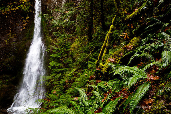 RAINFOREST MARYMERE FALLS OLYMPIC NATIONAL PARK WASHINGTON COLOR