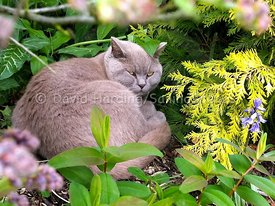 Cat in the undergrowth