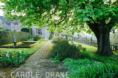 Formal pond near house surrounded by yew hedging, beds of tulips and wallflowers, and box and yew topiary, with spreading branches of horse chestnut tree above. Wayford Manor, Wayford, Crewkerne, Somerset, UK