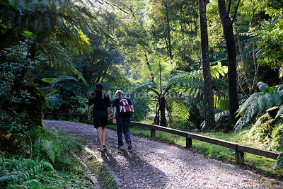 Walking trail in Caldeira Velha, Ribeira Grande. Sao Miguel, Azores islands