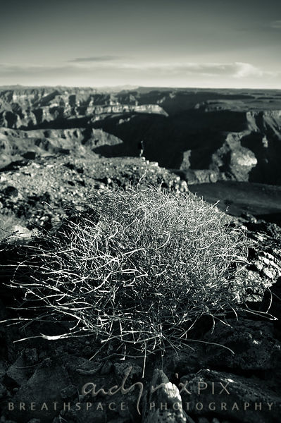 A dry bush growing above a desert canyon.