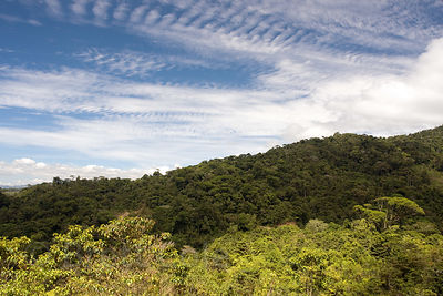 View of forested slope in the Penas Blancas valley from the Las Nubes Reserve, Costa Rica