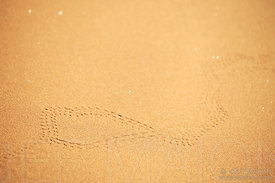 Insect tracks on sand