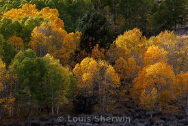 Changing colors in Aspen Grove