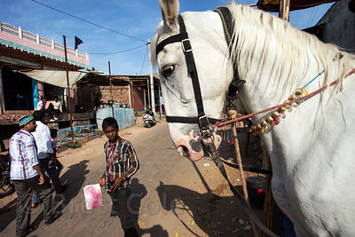 Horse rides for tourists at Taragarh Fort, Ajmer, Rajasthan, India