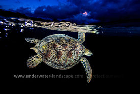 Night turtle