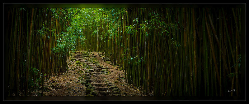 The Bamboo Path