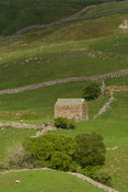 Old field barn Oxnop Gill in Swaledale, Yorkshire Dales National Park, UK.