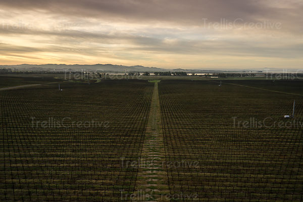 Aerial view of dormant vineyard in Napa Valley