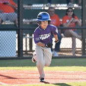 05-06-16 BB LL DIX Farm Wildcats v Gators photos