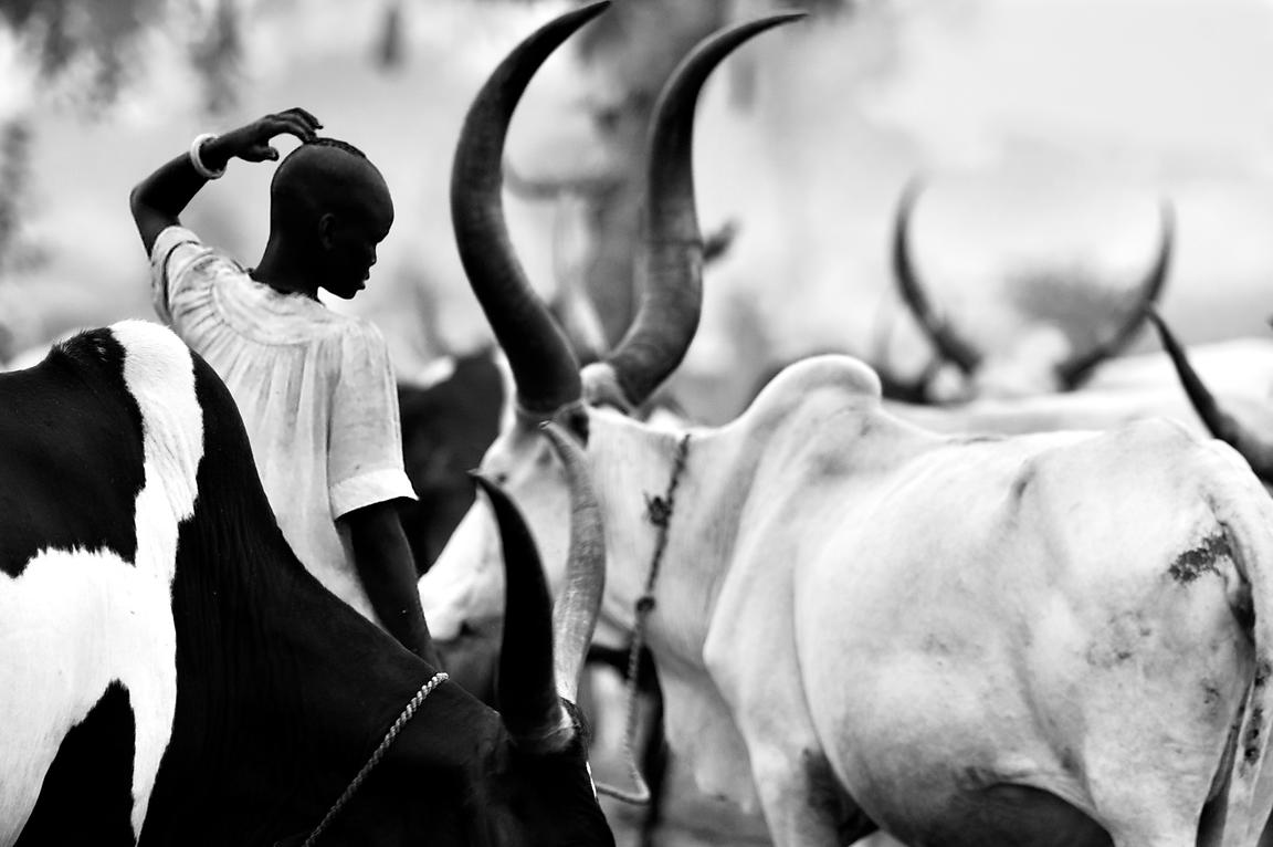 Dinka Cattle Camp