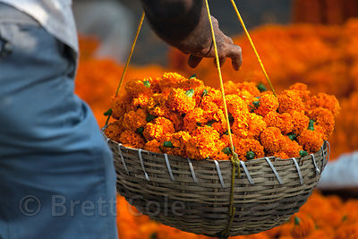 Orange marigold flowers at the Howrah Flower Market, commonly referred to as the largest flower market in Asia. Near Howrah Bridge along the Hooghly River, Kolkata, India.