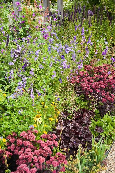 Border including Sedum telelphium 'Purple Emperor', Echinacea 'Harvest Moon', Agastache 'Black Adder' and Heuchera 'Chocolate Ruffles'. RHS Garden Harlow Carr, Harrogate, North Yorkshire, UK