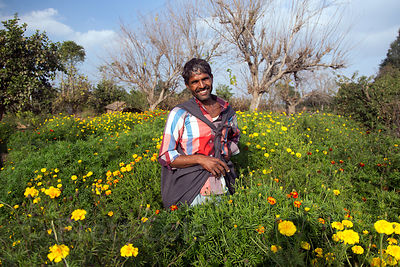 Happy flower farmer near Surajkund village, Rajasthan, India