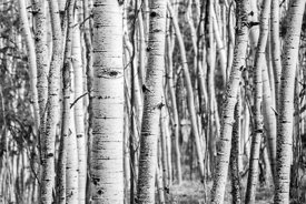 Pics of aspen forests with Karen this weekend!
