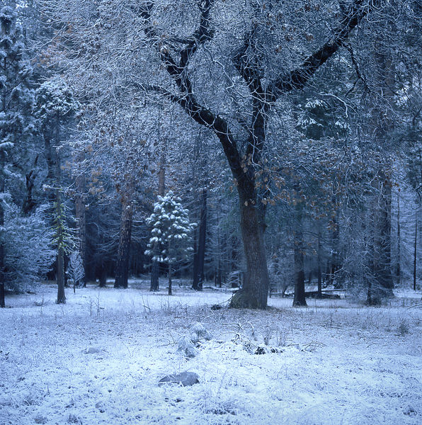 034-California_CA141057_Yosemite_Snow_Storm_007_Preview