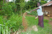 Lady tipping yard sweepings onto vegetable plot, to try and help fertility of the soil. Kenya.