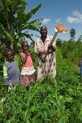 Grandmother teaching grandchildren how to use a hoe in a plot of ground nuts. Kenya.