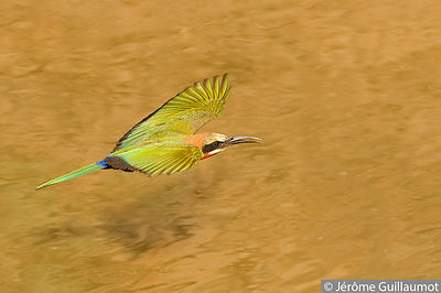 Phase 1 : The Bee-Eater flies over the water surface