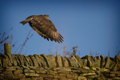 Buzzard Wall 2