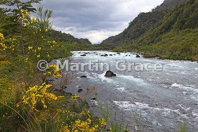 Typical Torrent Duck habitat, Rio Petrohue, Parque Nacional Vicente Perez Rosales, Region X Los Lagos, Chile