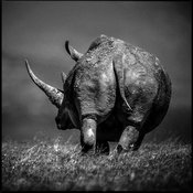 44602-Rhino_s_bottom_Laurent_Baheux