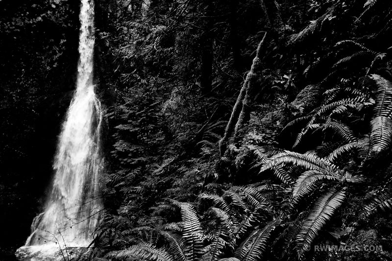 RAINFOREST MARYMERE FALLS OLYMPIC NATIONAL PARK WASHINGTON BLACK AND WHITE