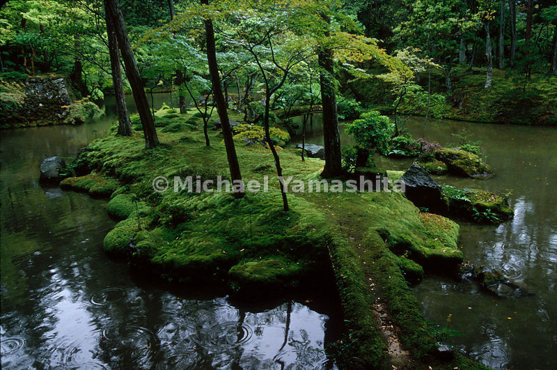 rain awakens the greens of the garden, enriching the varied hues of moss at Saiho-ji