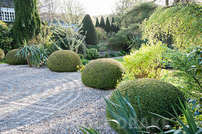 Clipped yew spheres frame the drive and the circular maze formed of stone setts laid in to the gravel. York Gate Garden, Adel, Leeds, Yorkshire