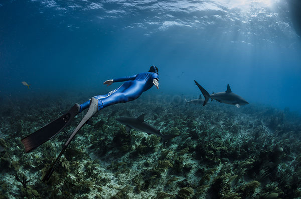 Carribean Reef Shark & Pierre Frolla
