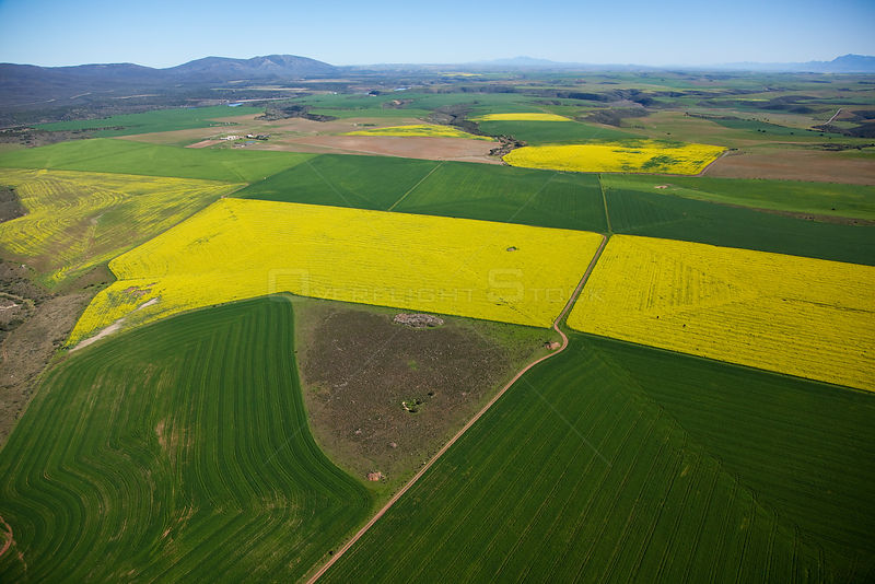 Aerial photo of Canola and Wheat fields, Overberg, Southern Cape, South Africa, August 2009