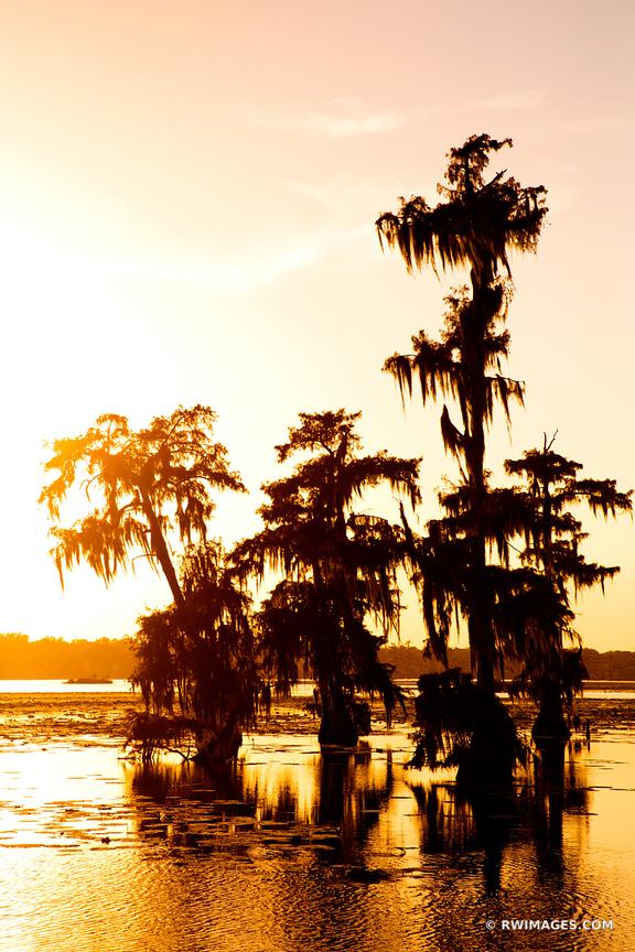 SUNSET LAKE MARTIN LOUISIANA SWAMP BALD CYPRESS TREES COLOR VERTICAL