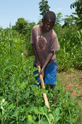 Young Kenyan boy working soil in a patch of ground nuts. Kenya.