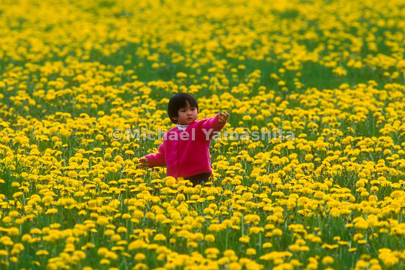 A young child in a field of dandelions.