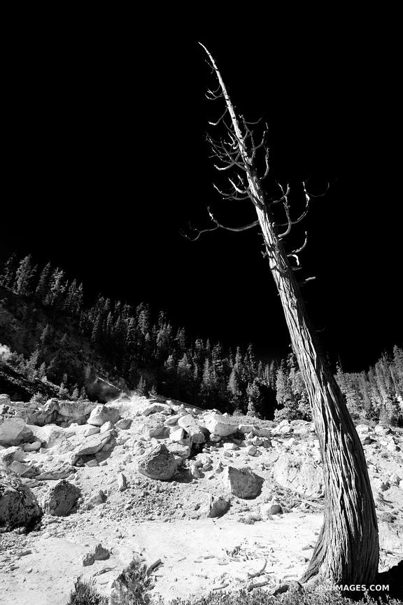 DEAD TREE DEVILS KITCHEN LASSEN VOLCANIC NATIONAL PARK CALIFORNIA BLACK AND WHITE VERTICAL