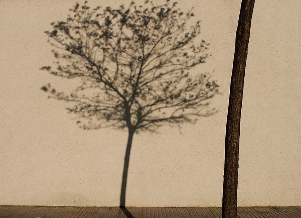 Tree_Shadow-RIP-3