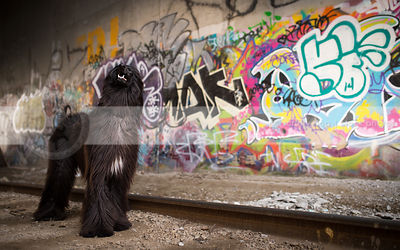black longhaired dog looking skyward in urban graffiti tunnel
