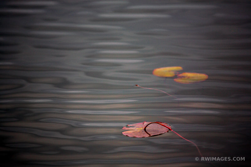 FLOATING LEAVES