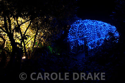Bridge covered with a net of blue lights at Abbotsbury Subtropical Gardens in October