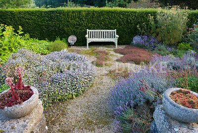Sunken herb garden includes clumps of thymes, purple sage, lavenders, fennel, sanguisorba and many other plants with medicinal or culinary properties. Seat is framed by a pair of peacocks. Steps are framed by a pair of stone bowls containing sempervivums. The Cider House, Buckland Abbey, Yelverton, Devon, UK
