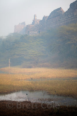 Wetlands adjacent to Purana Qila (old fort), Delhi, India