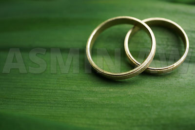 Gold wedding rings on large green leaf
