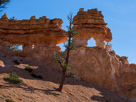 Bryce_Nation_Park_397