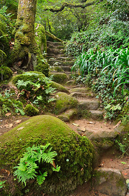An old footpath in the Forest of the Convent of the Capuchos, in the middle of the Sintra mountain range. A Unesco World Heritage Site. Portugal